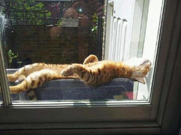 pencereden-gelen-sıcaklık